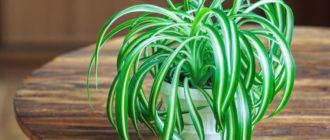 Комнатные растения с необычными свойствами: эти цветы должны быть в каждом доме