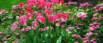 Изысканный одноцветный садик