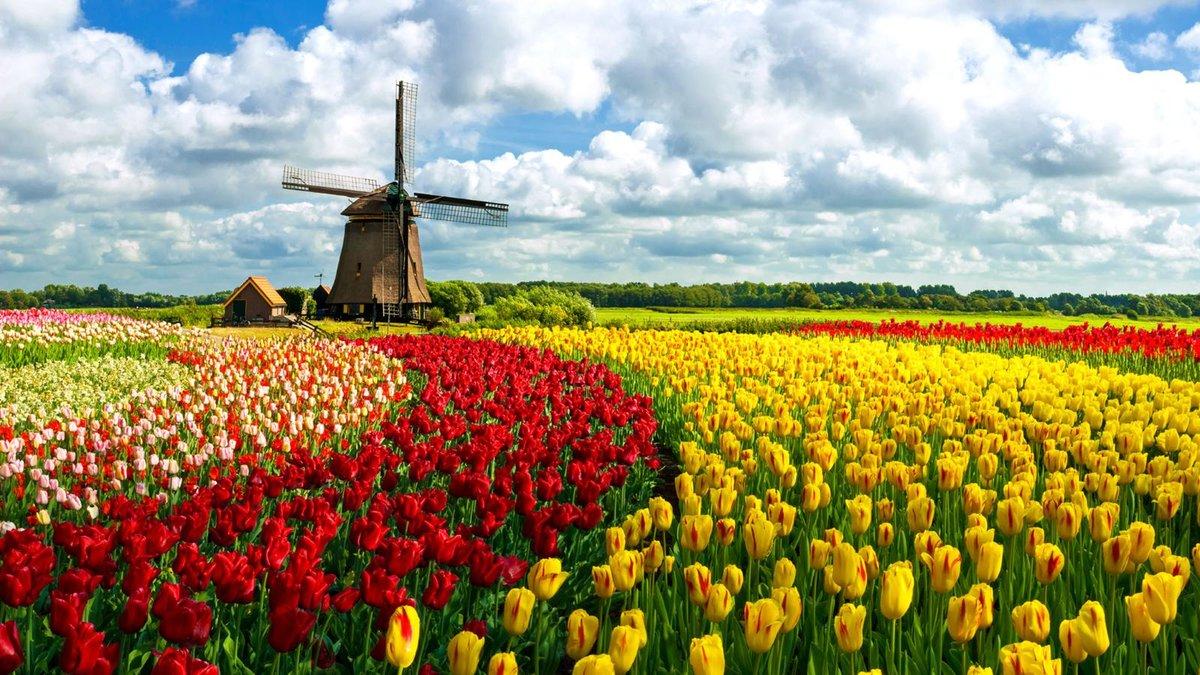 Тюльпаны в Нидерландах | Изюминки