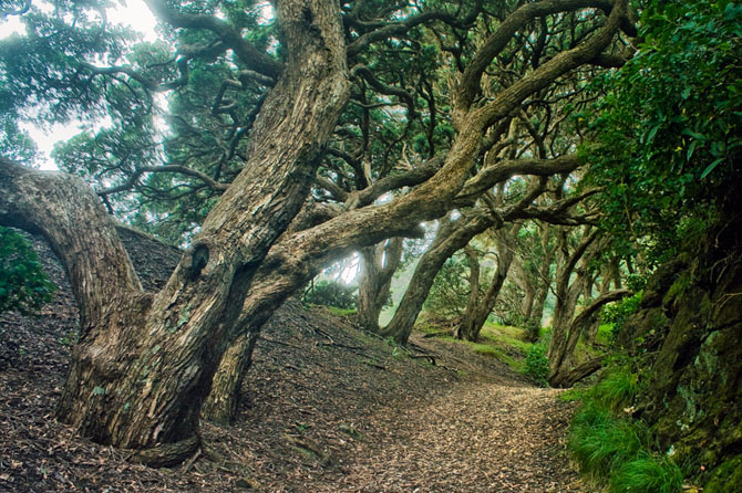 Эльфийские леса Новой Зеландии